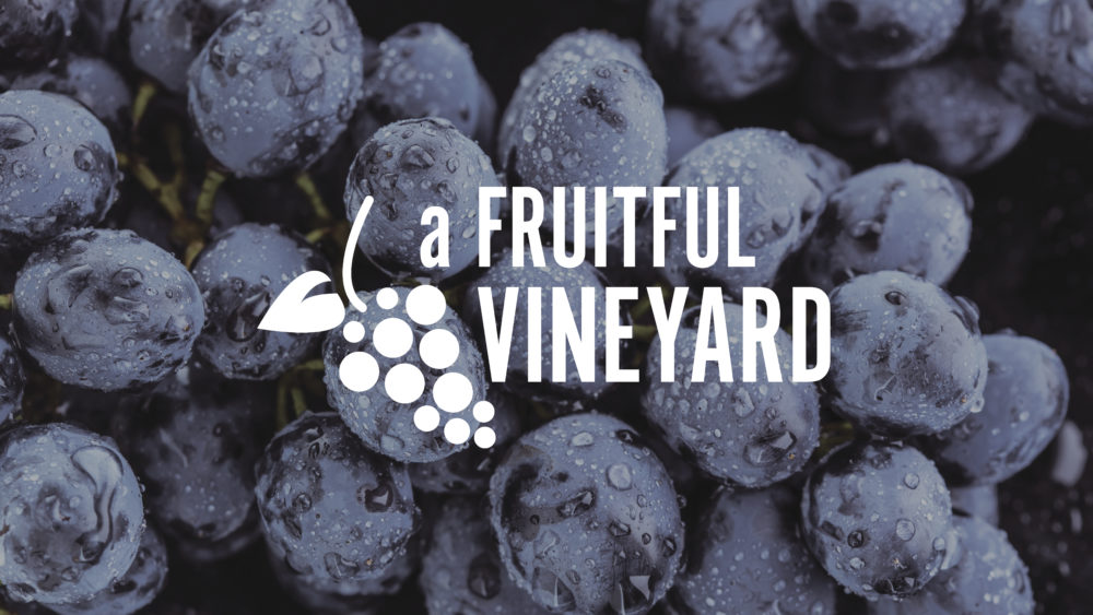 A Fruitful Vineyard Image