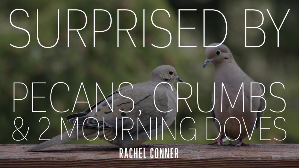 Surprised by Pecans, Crumbs, & Two Mourning Doves Image